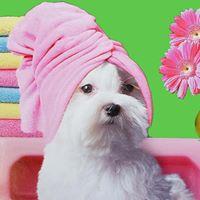 Fetching Fur Dog Grooming logo