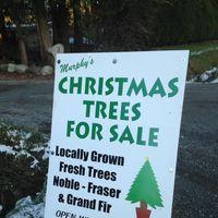Murphy's Christmas Tree Farm logo