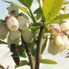 Pacific Northwest Berries & Bees logo