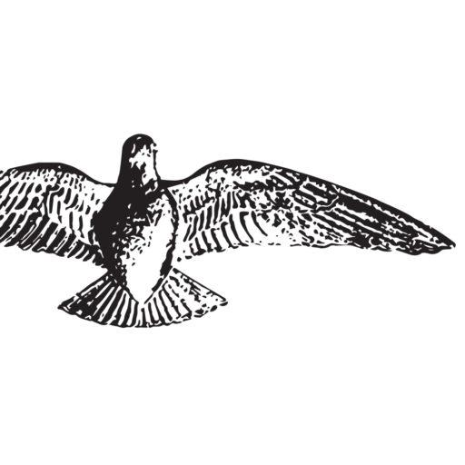 The Penny logo