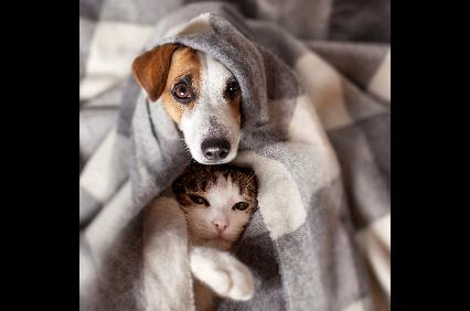 Photo uploaded by Family Pet Hospital