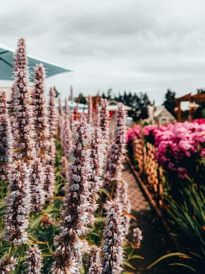Flowers near Langley, BC